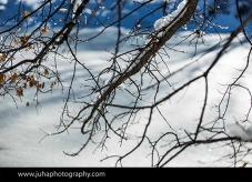 Snow covered branches in Central Park