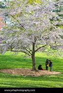 Kids playing under cherry tree