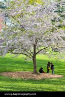 Kids playing under cherry tree