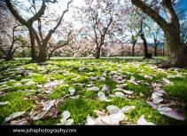 Central-Park-Spring_0090