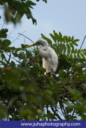 baby egret in a tree nest