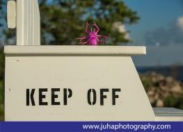 Keep off!